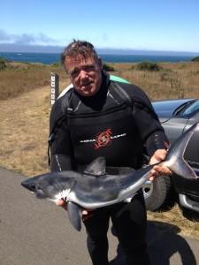 Drew Arnold Shark